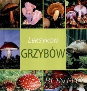 Okładka książki Leksykon grzybów