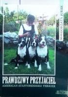 Prawdziwy przyjaciel American Staffordhire Terrier