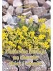 Okładka książki Zielarskie kuracje na choroby skóry i włosów