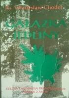 Gałązka Jedliny