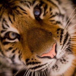 To, co książkowe tygryski lubią najbardziej