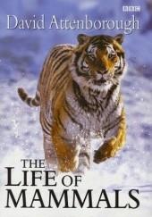 Okładka książki The Life of Mammals David Attenborough