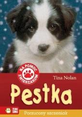 Okładka książki Pestka. Porzucony szczeniak Tina Nolan