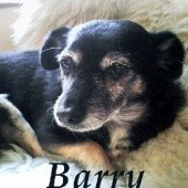 Okładka książki Barry. Opowiadania o psach Andrzej Juliusz Sarwa