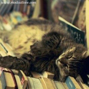 Koty i książki