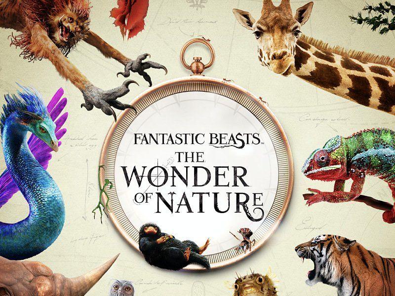 Magiczne stworzenia i prawdziwe zwierzęta